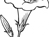 Drawing Flowers Hd Images Black Outline Drawing Flower White Flowers Free Drawing