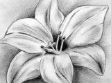 Drawing Flowers In Charcoal Tattoo Tattoo Pinterest Charcoal Drawings Tattoo and Drawings