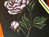 Drawing Flowers In Color Peony Art Peonies Drawing Flower Pencil Art Coloured Pencil