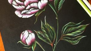 Drawing Flowers In Colored Pencil Peony Art Peonies Drawing Flower Pencil Art Coloured Pencil