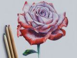 Drawing Flowers In Colored Pencils Drawing Rose Art Drawi