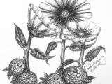 Drawing Flowers In Pen and Ink Daisies and Mums Pen and Ink Steemkr