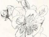 Drawing Flowers In Pen and Ink Sketch Pansies Drawing Flowers Ink Pen Drawings Drawings Sketches