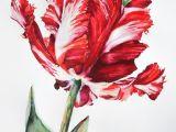 Drawing Flowers In Watercolor Page Lee Watercolor Of Carolyne Roehm Tulip Art Appreciation