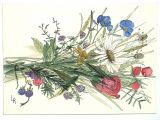 Drawing Flowers In Watercolor Watercolor Painting Illustration Botanical Garden Flowers Wildflower