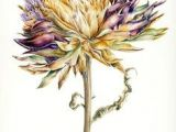 Drawing Flowers Jill Winch 531 Best Contemporary Botanical Artists Images Botanical