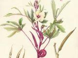 Drawing Flowers Jill Winch Die 43 Besten Bilder Von Botanics Botanical Drawings Botanical