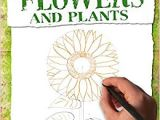 Drawing Flowers Jill Winch Flowers and Plants How to Draw Amazon Co Uk Mark Bergin Books