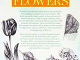 Drawing Flowers Jill Winch Jill Winch Drawing Flowers 7647464916 Allegro Pl Wia Cej Nia Aukcje