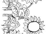 Drawing Flowers Kindergarten 65 Best Digital Flowers Images Flower Designs Sunflowers