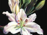 Drawing Flowers Pastels Elegance Flowers Pinterest Pastel Pastel Art and Pastel Drawing