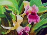 Drawing Flowers Pastels Pastel Drawing Tutorial Pink orchids Crafts Art Pastel Drawing