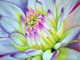 Drawing Flowers Pastels soft Pastel Drawings Recherche Google Dahlia Sunflower Rose