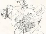 Drawing Flowers Pen and Ink Sketch Pansies Drawing Flowers Ink Pen Drawings Drawings Sketches