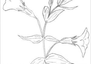 Drawing Flowers Pic Bunch Of Flowers Drawing Easy S S Media Cache Ak0 Pinimg originals
