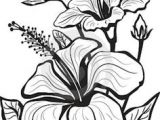 Drawing Flowers Picture Hd 1412 Nejlepa A Ch Obrazka Z Nasta Nky Flower Drawings Drawings