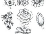 Drawing Flowers Techniques 361 Best Drawing Flowers Images Drawings Drawing Techniques
