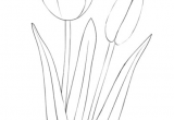 Drawing Flowers to Paint How to Draw A Tulip Step by Step Drawing Tutorials Draw Flowers