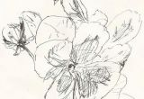 Drawing Flowers to Paint Sketch Pansies Drawing Flowers Ink Pen Drawings Drawings Sketches