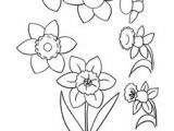 Drawing Flowers while On the Phone 87 Best How to Draw Flowers Plants Images Drawing Flowers