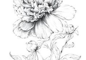 Drawing Flowers with Crayons 3274 Best Art Drawing Flowers Images In 2019 Colouring Pencils