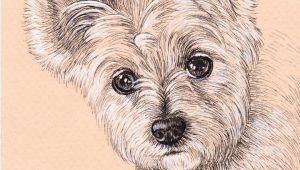 Drawing for Dog Lovers Lisa Creative Lab Custom Pet Portrait From Photo Dog Portrait