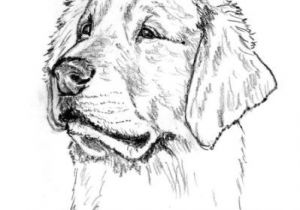 Drawing Golden Dog Pin by George W On Wood Burning Patterns Pyrography Pyrography