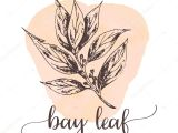 Drawing Hands Proko Bay Leaf Hand Drawn Ink Illustration Vector Design for Tags Cards