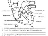 Drawing Heart with Blood Heart Anatomy Worksheet Awesome Heart Label Nutrition Label