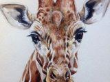 Drawing Ideas Giraffe Illustrator Marlim Watercolor Giraffe Watercolor Paintings