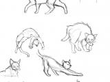Drawing Ideas Kitten Cat Anatomy Thingies Seiishin Art Ideas and Tutorials