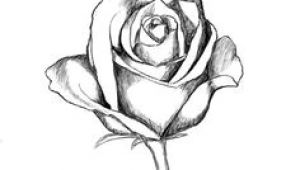 Drawing Ideas Of Roses 136 Best Rose Drawings Images Painting Drawing Painting On