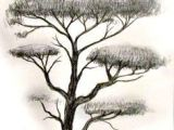 Drawing Ideas Of Trees 156 Best Drawing Trees Images In 2019 Drawing Trees Tree Drawings