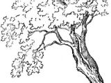 Drawing Ideas Of Trees How to Draw Trees and Oak Trees with Simple Steps Tutorial Draw