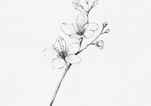 Drawing Japanese Flowers Cherry Blossom Hand Drawn Illustration by Inkylines these Flowers