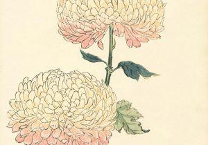Drawing Japanese Flowers Flowers asian Art Illustrations Pinterest Art Prints and