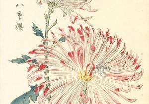 Drawing Japanese Flowers Keika Hasegawa Chrysanthemum Wood Block Prints D N D D D D N Dµd D