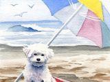 Drawing Little Dogs Bichon Frise Art Print Bichon Frise at the Beach by Artist Dj