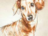 Drawing Little Dogs Dachshund Dachshund Doxies Dachshund Dogs Dachshund Art