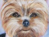 Drawing Little Dogs Pin by Evelyn Kemmerer On Yo Paint Ayorkie Pinterest Yorkie