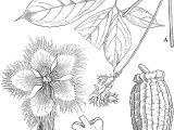 Drawing Master Class Flowers Pdf Pdf Cucurbitaceae