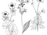 Drawing Masterclass Flowers Die 1638 Besten Bilder Von Flowers butterfly Doodle Art Doodle