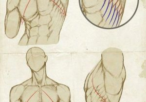 Drawing Neck Muscles Pin by Trex Guts06 On Reference In 2018 Pinterest Drawings