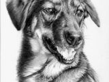 Drawing Of 3d Dog Awesome Pencil Work Linda Huber Drawings Paintings Pencil