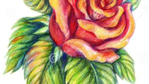 Drawing Of A Beautiful Red Rose 25 Beautiful Rose Drawings and Paintings for Your Inspiration