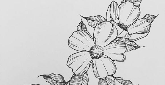 Drawing Of A Big Rose Wild Flower Wednesdays Rho In 2019 Drawings Art Art Drawings