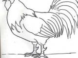 Drawing Of A Cartoon Rooster How to Draw A Rooster Step 5 Roosters Drawings Rooster