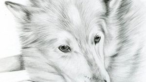 Drawing Of A Cat and Dog Custom Pencil Cat Sketch Size 4 X 4 or 5 X 5 Pet Portrait Cat