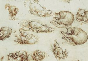 Drawing Of A Cat S Back Leonardo Da Vinci Cats Drawings and 6 Quotes