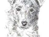 Drawing Of A Dog Biscuit How to Draw A Dog From A Photograph